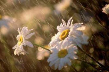پیش بینی هوا تا پایان تعطیلات نوروزی/ روز طبیعت، بارانی است