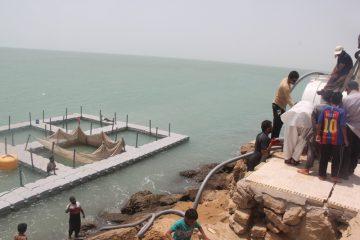 آغاز پرورش ماهی در ساحل چابهار